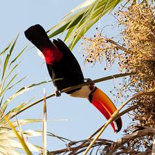 aka-Pantanal-2011-08-15__D3X7553.jpg