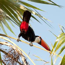 aka-Pantanal-2011-08-15__D3X7565.jpg