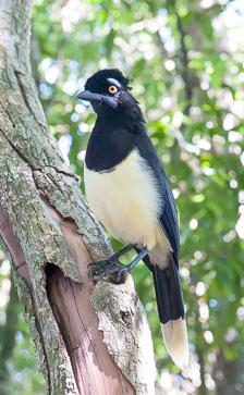aka-Iguazu-2012-03-03__D3X0676.jpg