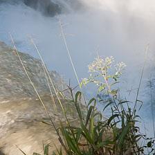 aka-Iguazu-2012-03-03__D3X1733.jpg