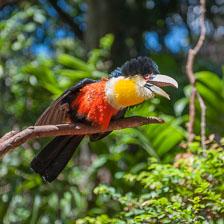 aka-Iguazu-2012-03-04__D3X1779.jpg