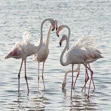 aka-Southern-Africa-2012-08-09__D3X4454.jpg