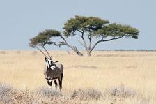 aka-Southern-Africa-2012-08-12__D3X4911.jpg