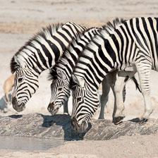 aka-Southern-Africa-2012-08-12__D3X4954.jpg
