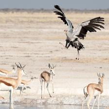 aka-Southern-Africa-2012-08-12__D3X4996.jpg