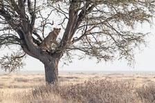 aka-Southern-Africa-2012-08-13__D3X5282.jpg