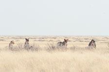 aka-Southern-Africa-2012-08-13__D3X5360.jpg