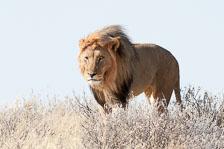 aka-Southern-Africa-2012-08-13__D3X5433.jpg