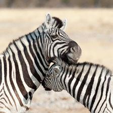 aka-Southern-Africa-2012-08-13__D3X5699.jpg