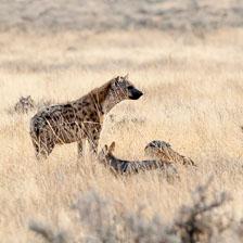aka-Southern-Africa-2012-08-14__D3X5841.jpg