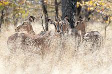 aka-Southern-Africa-2012-08-14__D3X6048.jpg