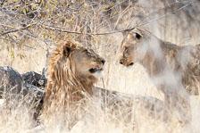 aka-Southern-Africa-2012-08-14__D3X6111.jpg