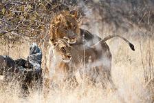 aka-Southern-Africa-2012-08-14__D3X6116.jpg