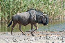 aka-Southern-Africa-2012-08-14__D3X6275.jpg