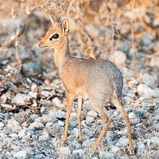 aka-Southern-Africa-2012-08-14__D3X6424.jpg