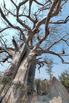 aka-Southern-Africa-2012-08-16__D3X6702_3_4.jpg