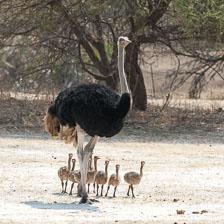 aka-Southern-Africa-2012-08-16__D3X6733.jpg