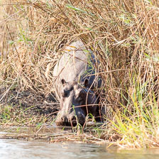 aka-Southern-Africa-2012-08-16__D3X6879.jpg