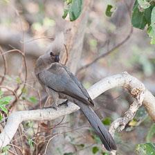 aka-Southern-Africa-2012-08-18__D3X7655.jpg