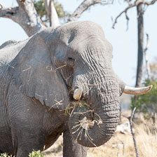 aka-Southern-Africa-2012-08-19__D3X7918.jpg
