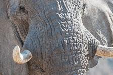 aka-Southern-Africa-2012-08-19__D3X7929.jpg