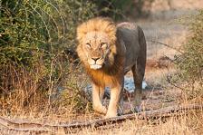 aka-Southern-Africa-2012-08-23__D3X9080.jpg