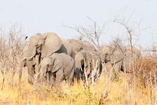 aka-Southern-Africa-2012-08-23__D3X9139.jpg