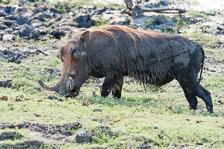 aka-Southern-Africa-2012-08-23__D3X9371.jpg