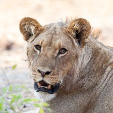 aka-Southern-Africa-2012-08-23__D3X9408.jpg