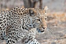 aka-Southern-Africa-2012-08-23__D3X9478.jpg