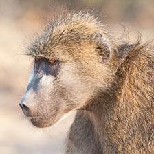 aka-Southern-Africa-2012-08-24__D3X9581.jpg