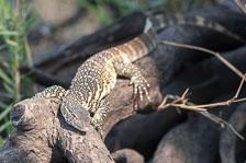 aka-Southern-Africa-2012-08-24__D3X9643.jpg