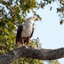 aka-Southern-Africa-2012-08-24__D3X9726.jpg