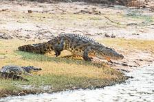 aka-Southern-Africa-2012-08-24__D3X9881.jpg