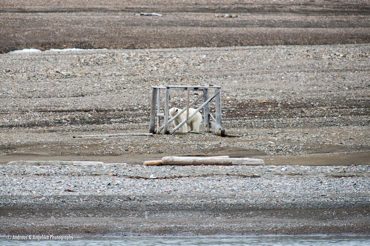 aka-Spitsbergen-2013-07-08__D8X1680.jpg