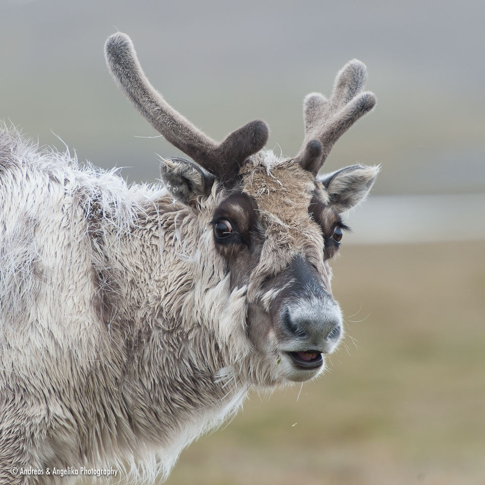 aka-Spitsbergen-2013-07-10__D3X7534.jpg