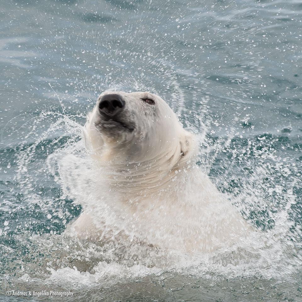 aka-Spitsbergen-2013-07-12__D3X8221.jpg