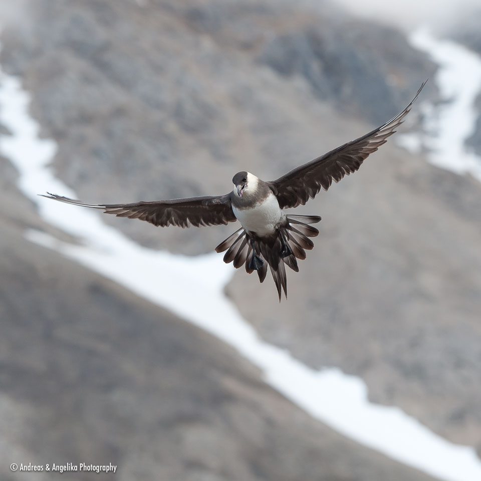 aka-Spitsbergen-2013-07-13__D3X8699.jpg