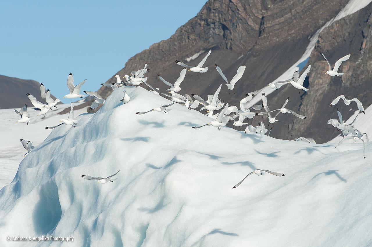 aka-Spitsbergen-2013-07-14__D3X9815.jpg