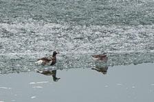 aka-Spitsbergen-2013-07-02__D3X3805.jpg