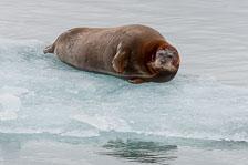 aka-Spitsbergen-2013-07-03__D3X4208.jpg