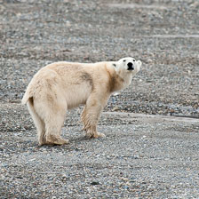 aka-Spitsbergen-2013-07-04__D3X5015.jpg