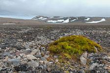 aka-Spitsbergen-2013-07-07__D3X6483_4_5.jpg