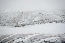 aka-Spitsbergen-2013-07-08__D8X1791.jpg