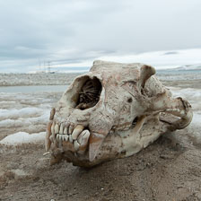 aka-Spitsbergen-2013-07-09__D3X7154.jpg