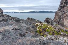 aka-Spitsbergen-2013-07-10__D3X7664_5_6.jpg