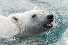 aka-Spitsbergen-2013-07-12__D3X8287.jpg