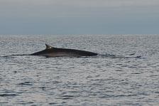 aka-Spitsbergen-2013-07-12__D8X2281.jpg
