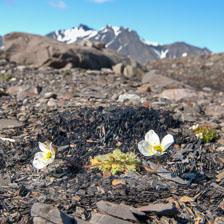 aka-Spitsbergen-2013-07-14__D3X9643_4_5.jpg