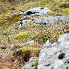 aka-Spitsbergen-2013-07-16__D3X0319.jpg